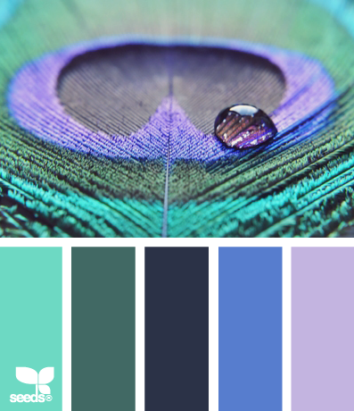 peacock colour inspiration