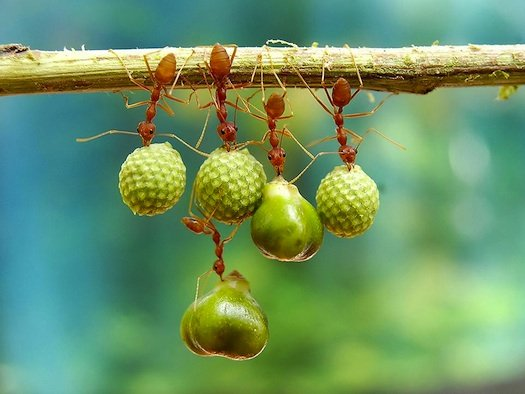Nature_Photography_ants