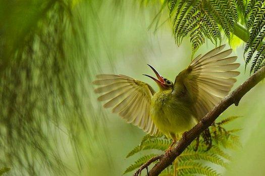 Nature_photography_bird