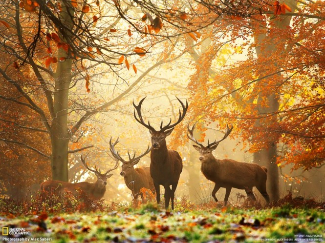 Nature_Photography_Fall