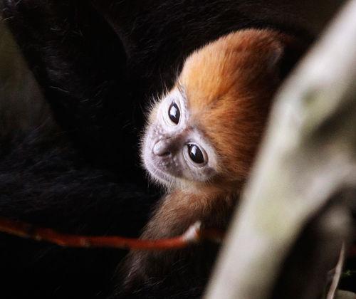 Nature_Photography_monkey