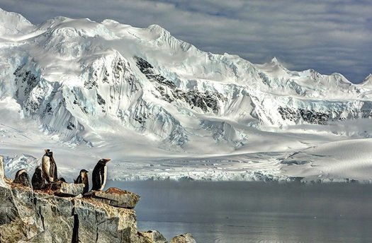 Nature_Photography_penguins