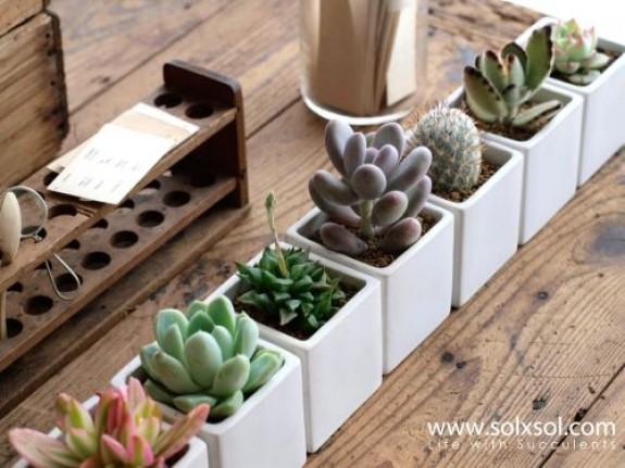Office Plant Ideas_2jpg