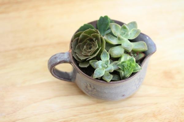 Office Plante Ideas_Succulents_2