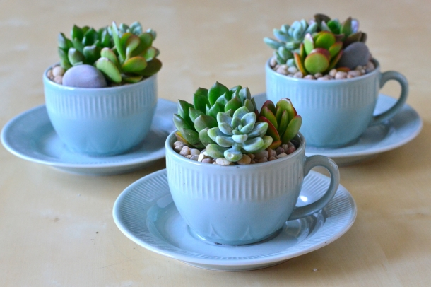 Succulentin tea cup_Office plant ideas