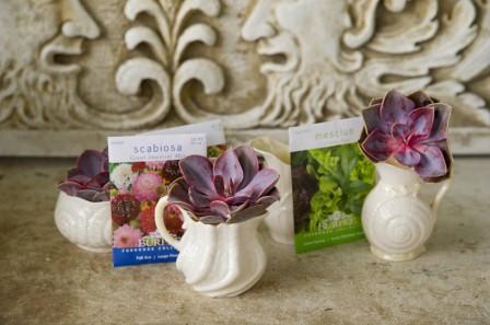 Vase Succulents_Office Plant Ideas